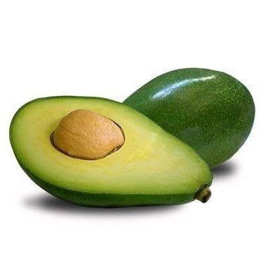 Muda De Abacate Quintal - Enxertadas!