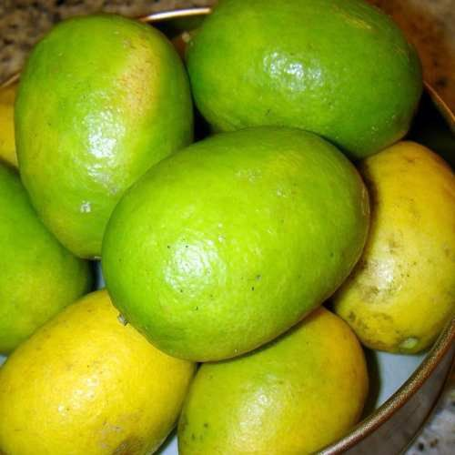 Muda de Limão Galegão ou Galego Comprido
