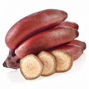 Muda De Banana Roxa Ou Banana São Tomé - Clonada