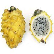 Kit com 3 estacas de Pitaya Amarela Colombiana - com espinho