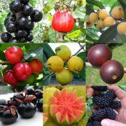 Kit com 10 Mudas Frutiferas - Goiaba + Amora + Jabuticaba + Cabeludinha + Araçá + Pitanga + Camu-Camu + Cereja + Acerola + Grumixama