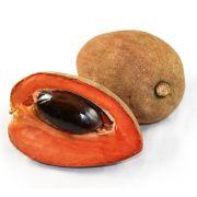 Muda da Fruta Mamey ou Mamei - Alporquia - Produz em 1 ano
