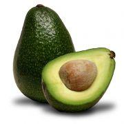 Muda de Abacate Avocado Fuerte - Enxertada
