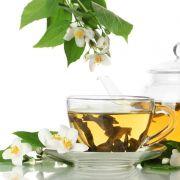 Muda de Camélia Sinensis - Chá Verde - Já Produz Flores