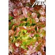 Sementes de Alface Prado Mimosa Roxa (Isla Superpak)