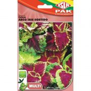 Sementes de Coleus-de-Java Arco-Íris Sortido (Isla Multi)