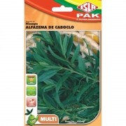 Sementes de Hissopo Alfazema de Caboclo (Isla)