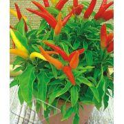 Sementes de Pimenta Espaguetinho Ornamental (Isla)