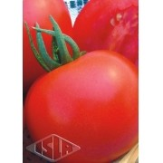 Sementes de Tomate Santa Clara I-5300 (Isla Multi)