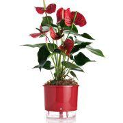 Vaso Autoirrigável Vermelho MINI 9,5cm (alt)
