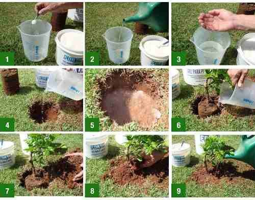 Gel Para Plantio De Mudas - Forth Gel -  2 Kg