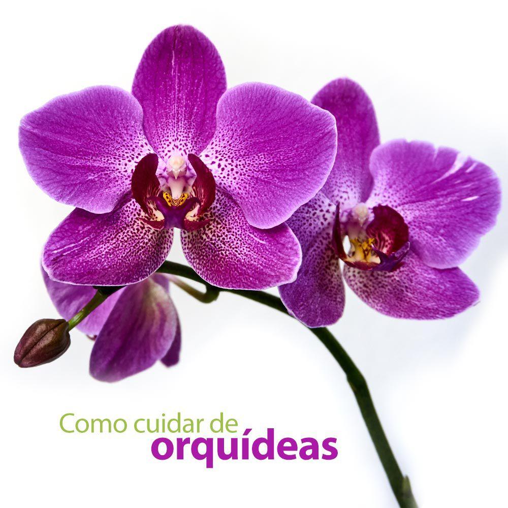 Curso Como Cuidar de Orquídeas