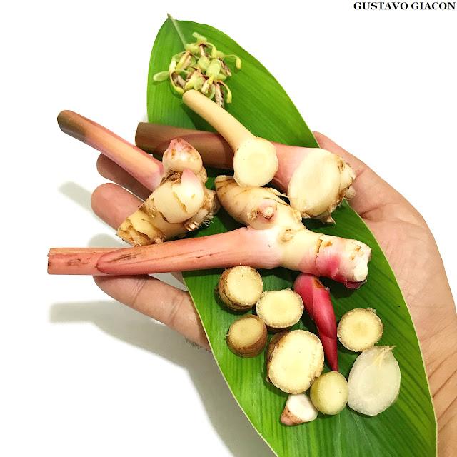 Galangal ou Gengibre Tailandês - Especiaria