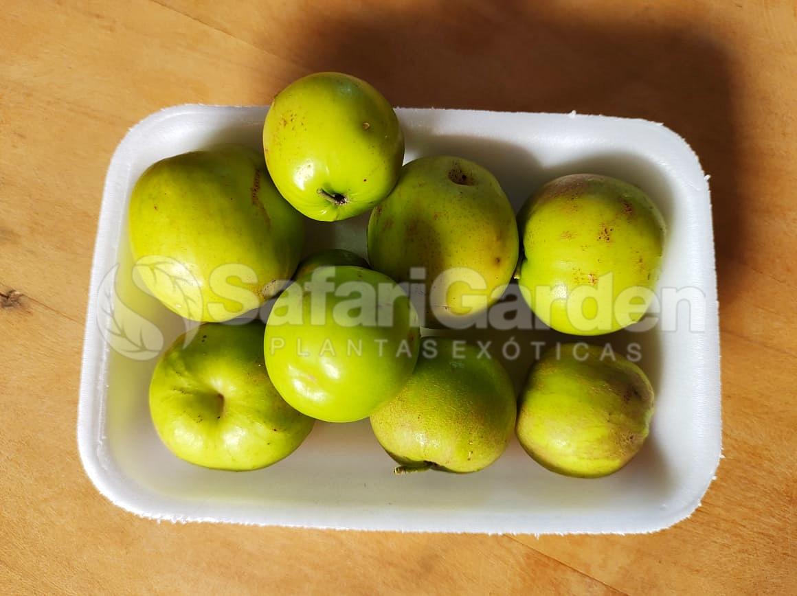Jujuba Chinesa - Fruta Rara
