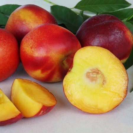 Kit de Frutas Anãs para Vaso - Pêssego Anão + Nectarina Anã + Jabuticaba Híbrida