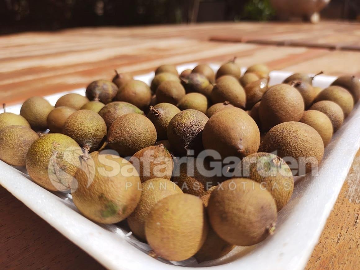 Mamoncillo - Fruta Rara e Exótica