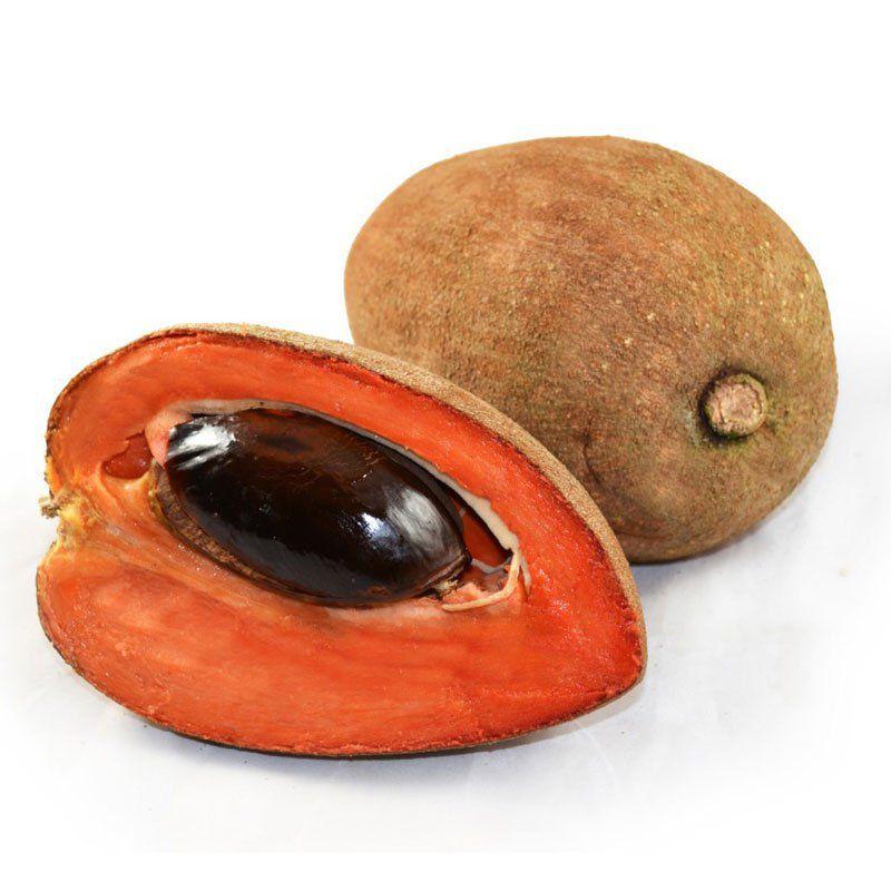 Muda da Fruta Mamei ou Mamey