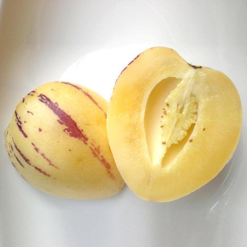 Muda de Melão Pêra - Solanum Muricatum
