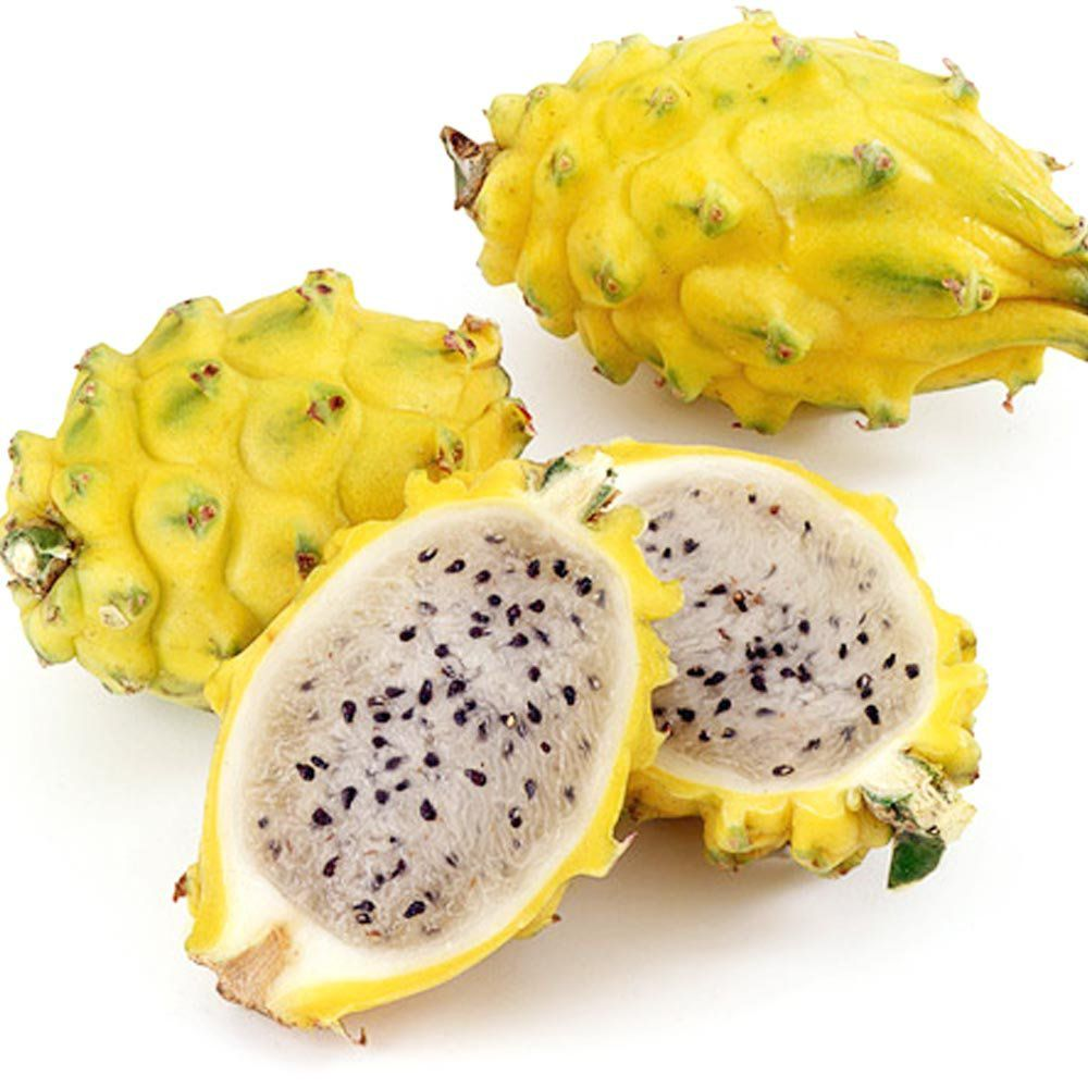 Muda de Pitaya Amarela Colombiana - Com espinho - ENRAIZADA