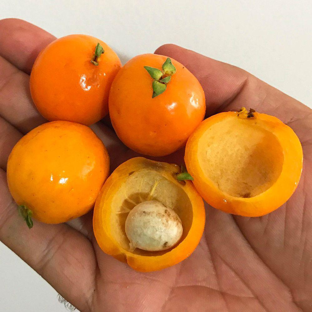 Muda De Ubaia Amarela - Eugenia glandulosa
