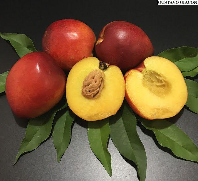 Mudas Raras de Nectarina - Saborosa Frutífera