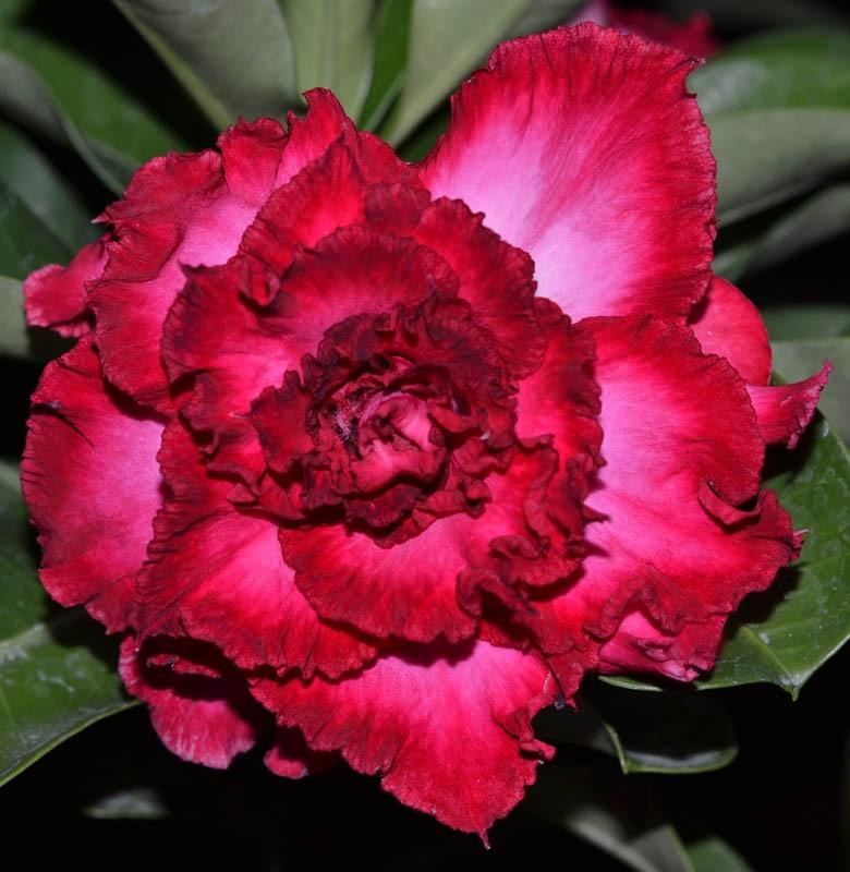 10 tipos de flores yahoo dating 2
