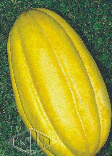 Sementes de Melão Gaúcho Caipira (Isla Superpak)