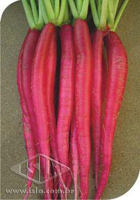 Sementes de Rabanete Vermelho Comprido