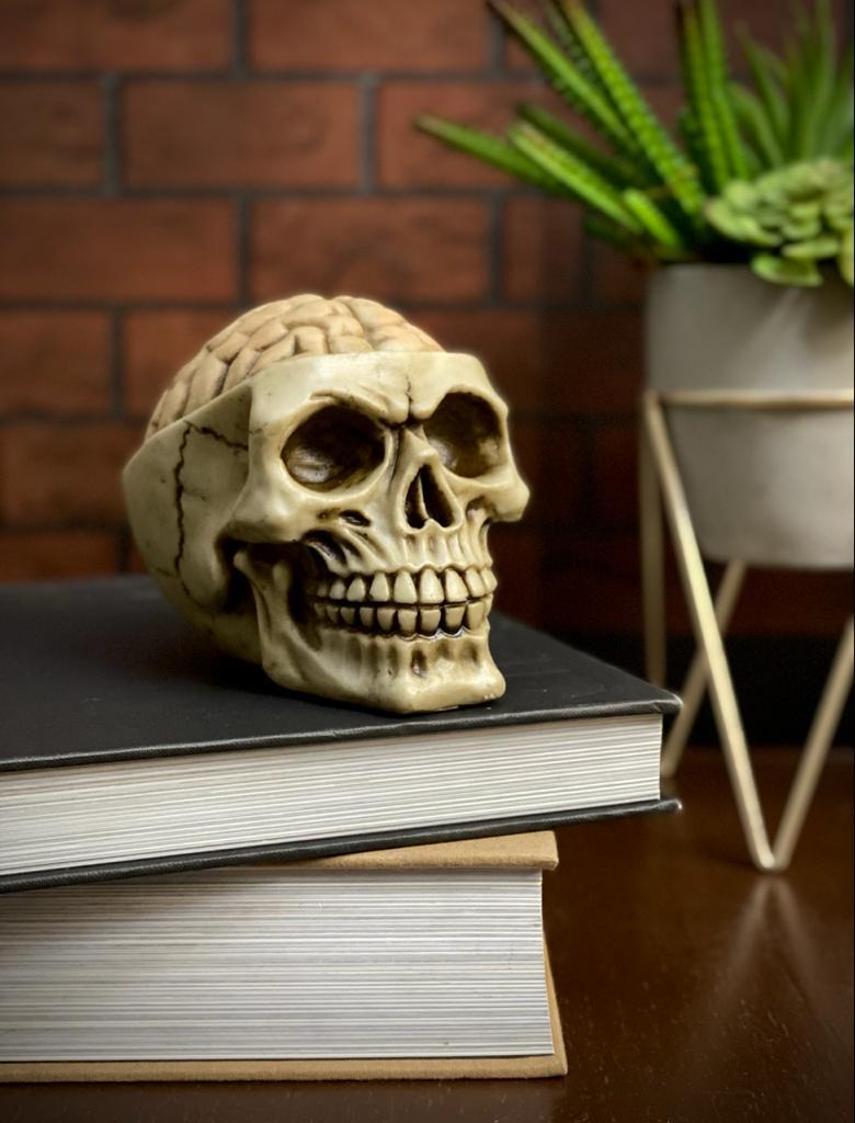 Caveira Crânio Skull Decorativa Cérebro