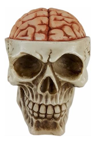 Caveira Skull Decorativa Cérebro