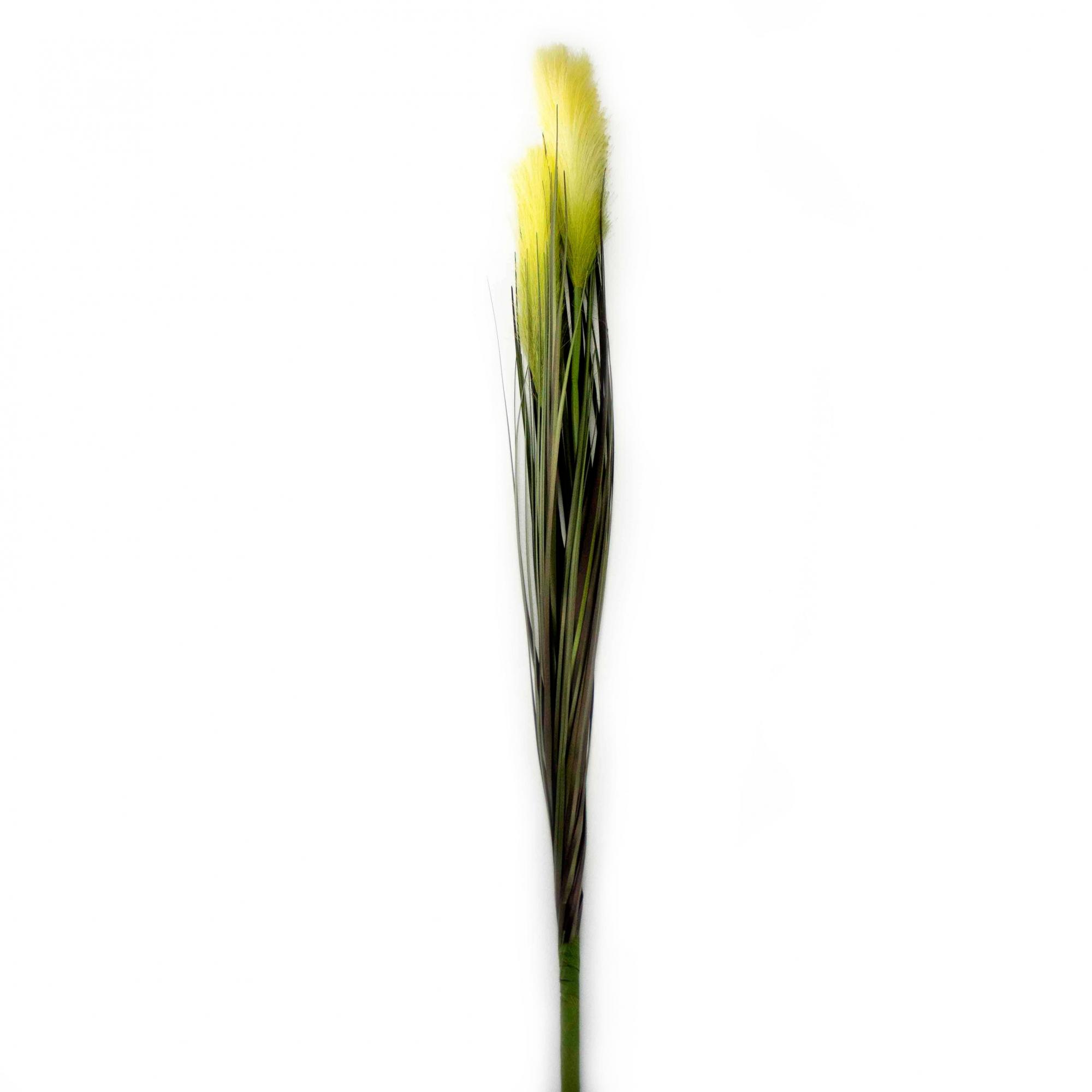 Capim dos Pampas com 2x Pluma Verde Creme 85 cm - D'Rossi