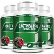 Cactinea Pro 500mg - Original - Opuntia Fícus - 03 Potes