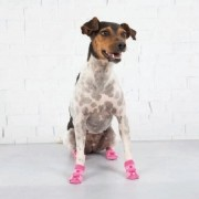 Meias LuLupo Pet Socks - Rosa