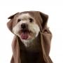 Toalha de Banho Pet c/ Capuz Cachorrinho
