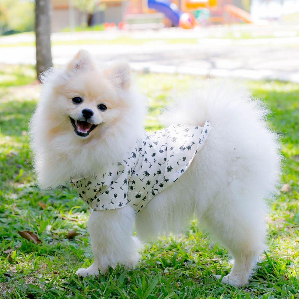 Camisa Roupinha para Cachorro - Coqueiros