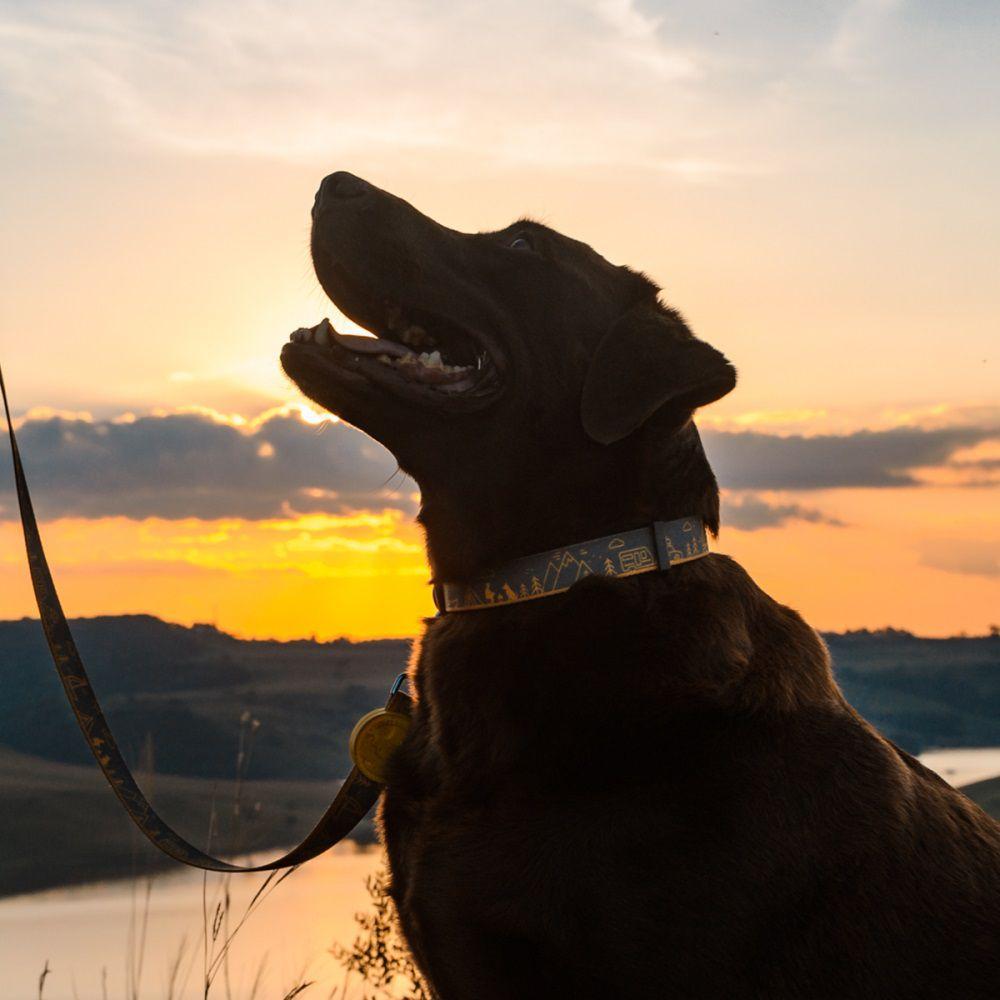 Coleira para Cachorro Cachorreiros Outdoor
