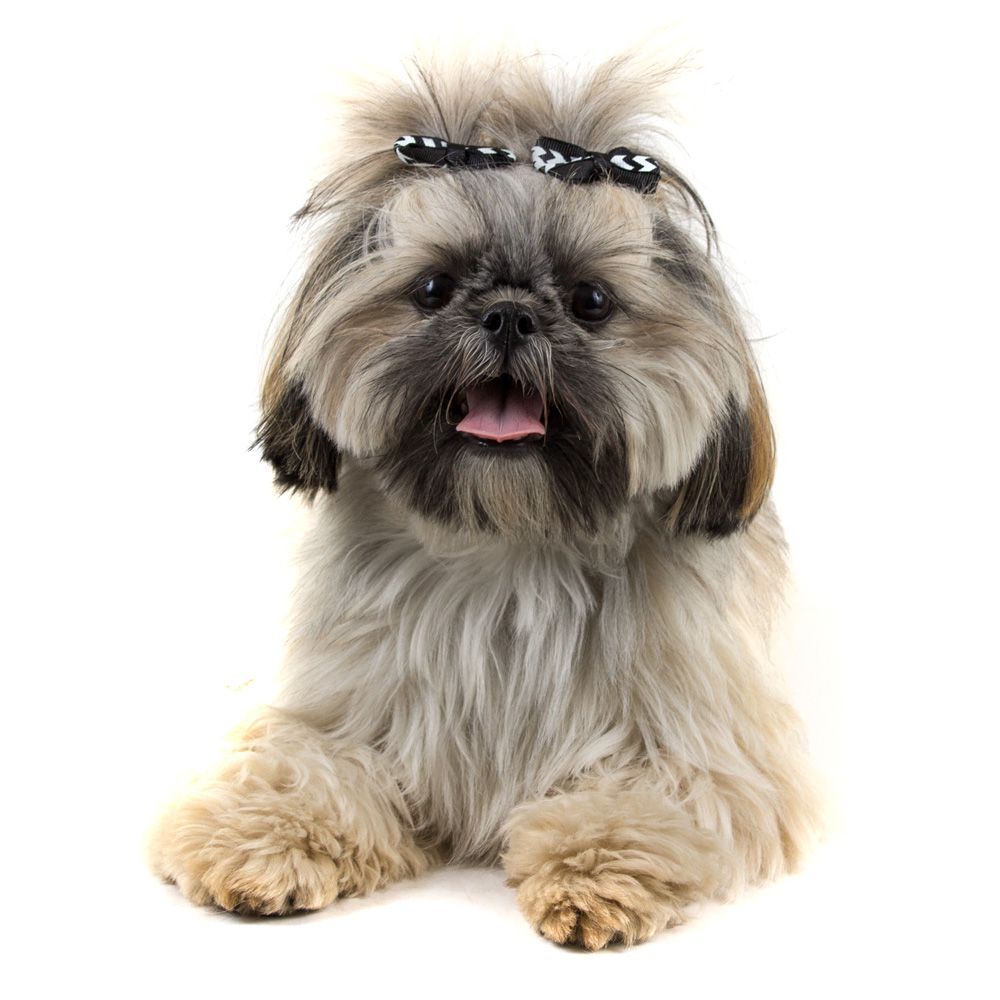 Laço Pet Cachorro Chevron Preto