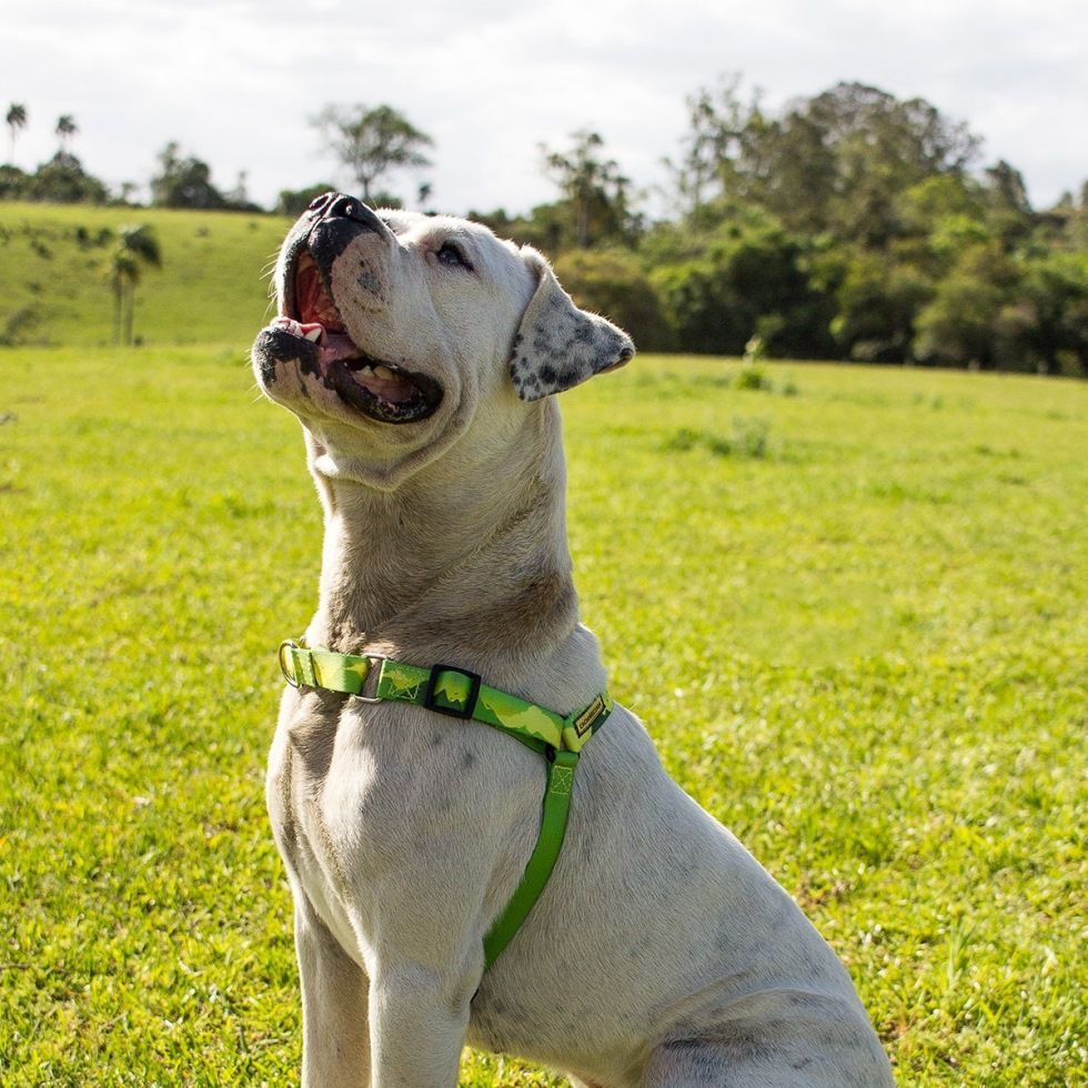 Peitoral Anti Puxão para Cachorro Cachorreiros Adventure - Frete Grátis Sul e Sudeste