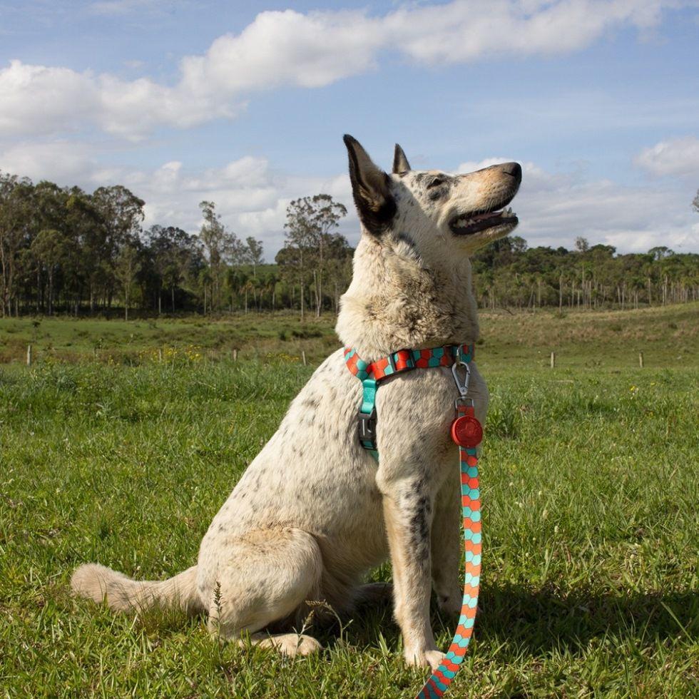Peitoral Anti Puxão para Cachorro Cachorreiros Honey