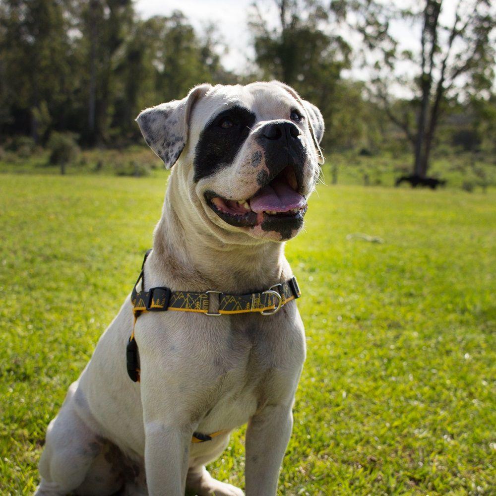 Peitoral Anti Puxão para Cachorro Cachorreiros Outdoor - Frete Grátis Sul e Sudeste