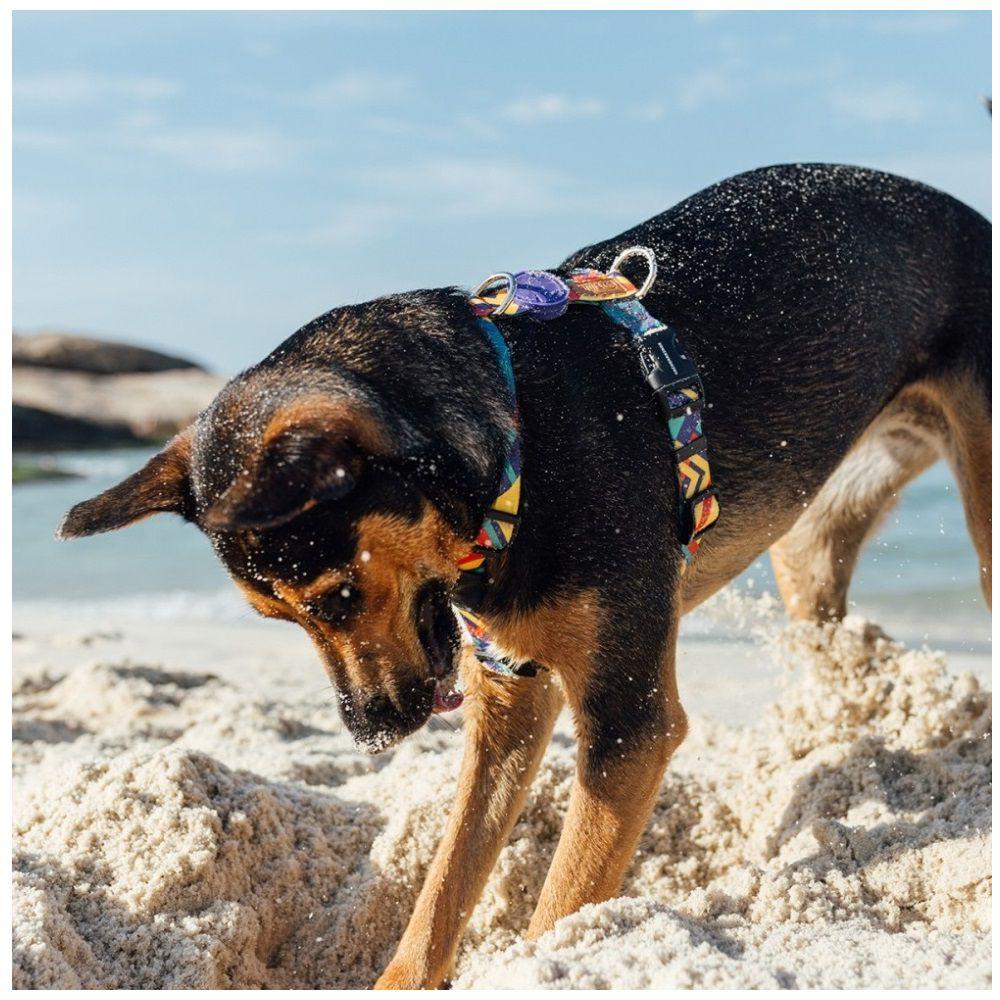 Peitoral H para Cachorro Cachorreiros T-Mutts - Frete Grátis Sul e Sudeste