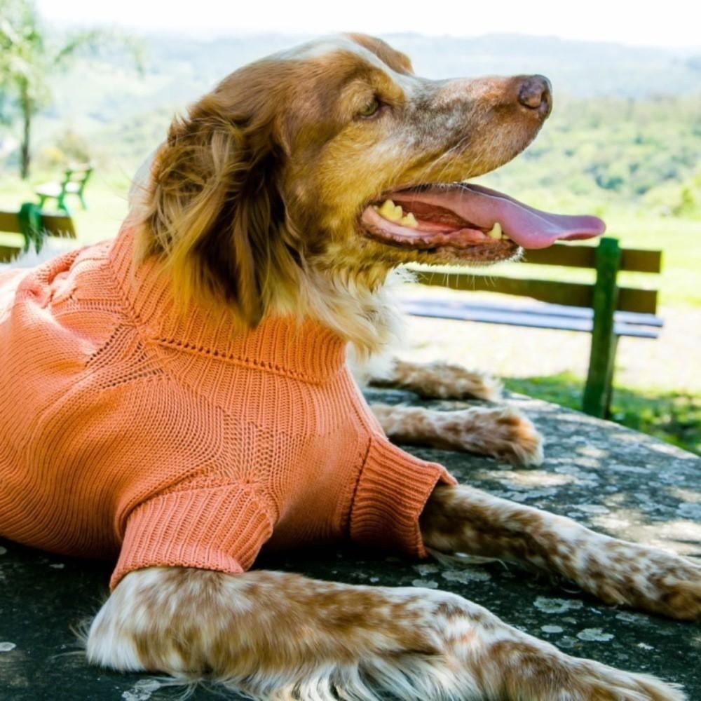 Suéter Roupinha para Cachorro - Laranja