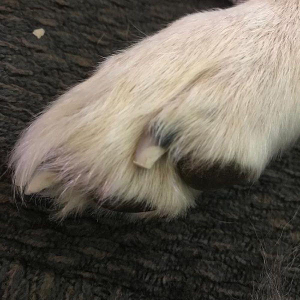 Kit Pet Grooming para Lixar Unhas de Cachorro - Dremel