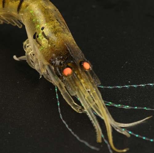 12 Iscas Artificiais Camarão Silicone Realístico 9cm 3 Cores  - Life Pesca - Sua loja de Pesca, Camping e Lazer