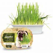 Grama para Cães iPet Green Digestive Grass 50g