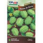 Semente Maxixe Do Norte Topseed H058 -10 Pacotes