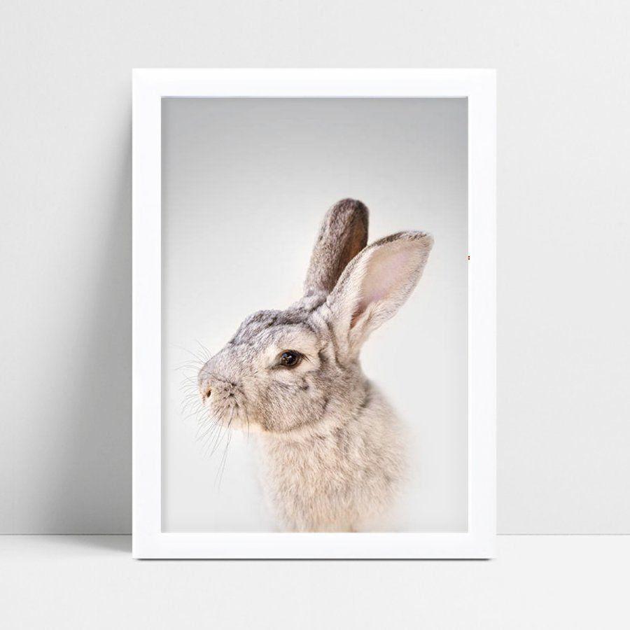 Placa quadro decoração coelho