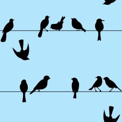 Papel de Parede Pássaros no Fio