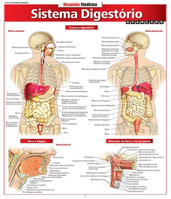 Sistema Digestorio Avancado