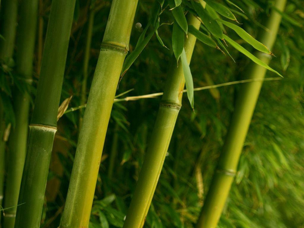 Aromatizador Bamboo Frasco Com válvula (1 Litro)